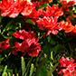 Постоянная ссылка на Цветы в формате3D