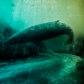 Постоянная ссылка на Создание подводной сцены вPhotoshop