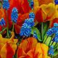 Постоянная ссылка на Весенние цветы для вашеговдохновения