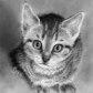 Постоянная ссылка на Удивительные рисунки ZindyS.D.Nielsen