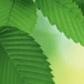 Постоянная ссылка на 11 зеленых природныхтекстур