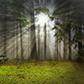 Постоянная ссылка на Добавляем солнечные лучи на фотографии вPhotoshop