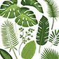Постоянная ссылка на Бесплатный ботаническийвектор
