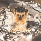 Постоянная ссылка на 20 бесплатных фотографий новогоднихсобак