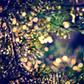 Постоянная ссылка на Новогодние огни нафотографиях
