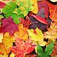 Постоянная ссылка на Осенние текстуры и паттерны для вашегодизайна