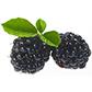 Постоянная ссылка на Овощи и фрукты нарисунках