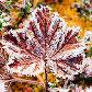 Постоянная ссылка на Иней в фотографиях для зимнегонастроения