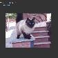 Постоянная ссылка на Создание изображений с адаптивной центровкой с использованиемCSS3