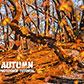 Постоянная ссылка на Делаем из летнего пейзажа осенний в AdobePhotoshop