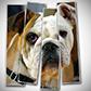 Постоянная ссылка на Вертикальные рамки для фотографии в AdobePhotoshop