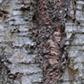 Постоянная ссылка на Более 200 текстур коры деревьев в высокомразрешении