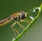 Постоянная ссылка на 40 ошеломляющих макрофотографий с воднымикаплями
