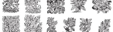 vector-plants