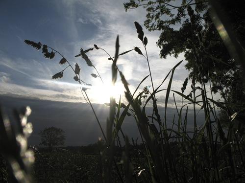 летнее поле