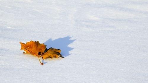 лист на снегу