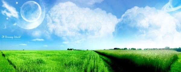 яркое зеленое поле