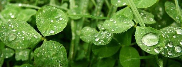 яркие зеленые листья