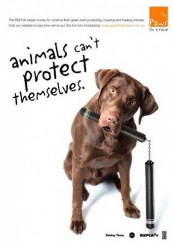Животные не могут защитить себя сами