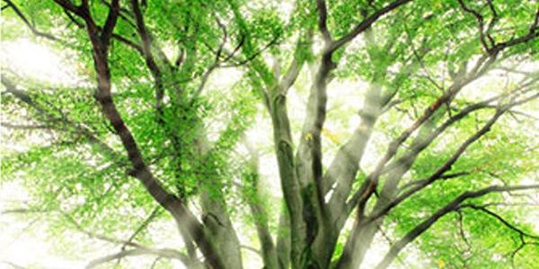 Добавьте лучи света между ветками деревьев