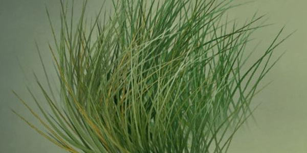 Туториал для создания травы