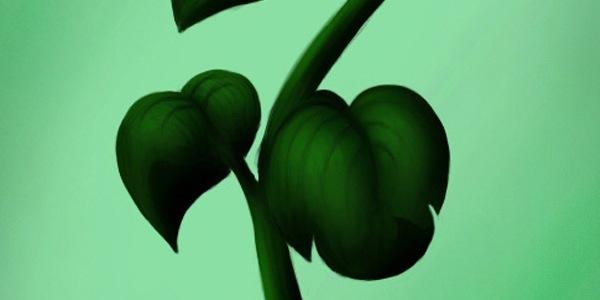 рисунок растения