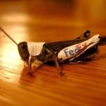 grasshopper-fedex.jpg
