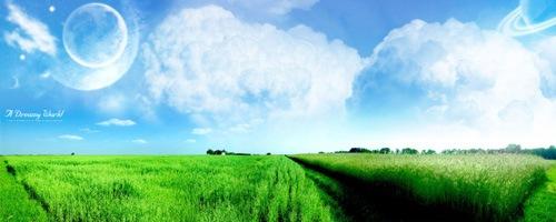 Поля зеленой пшеницы