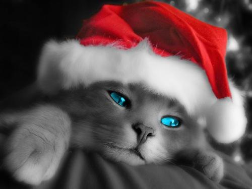 Кошечка - Санта