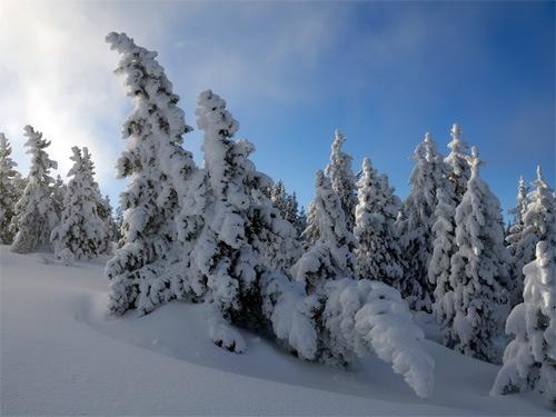 зимние-фотографии-для-заставки-на-рабочий-стол