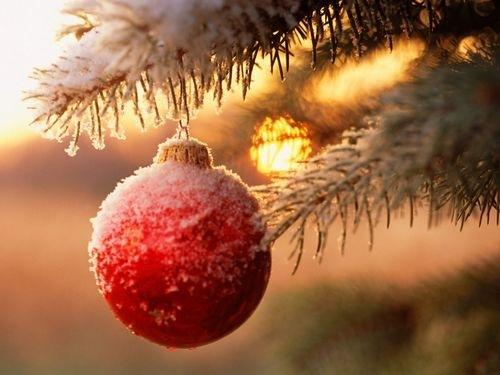 новогодняя елка в снегу