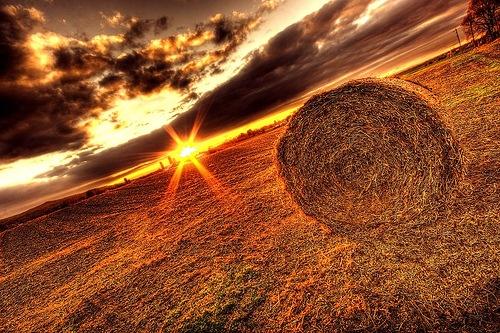 поле и сено в хдр