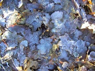 бесплатные текстуры замороженной листвы