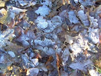 красивые зимние текстуры природы
