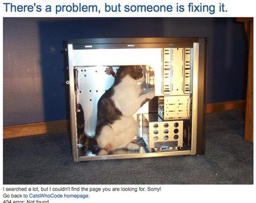 Кот в компьютере
