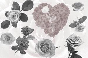 Кисти розы