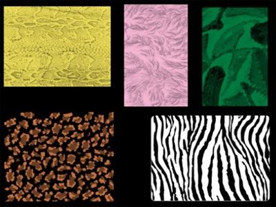 Набор из 5 кистей кожи животных