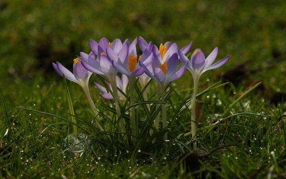 весенние цветы на монитор