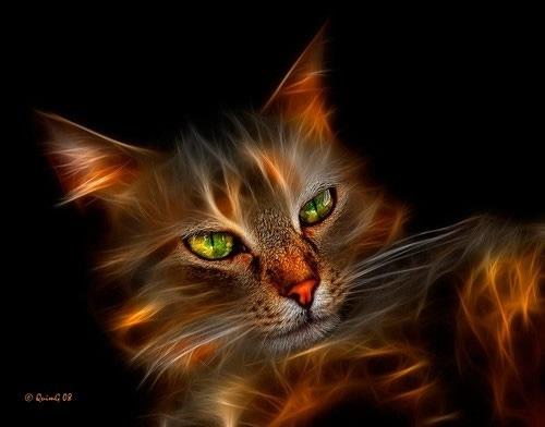 обои с огненным котом