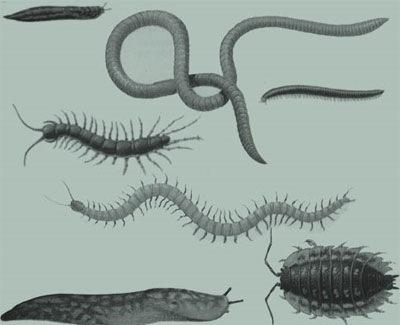 кисти-черви-и-насекомые