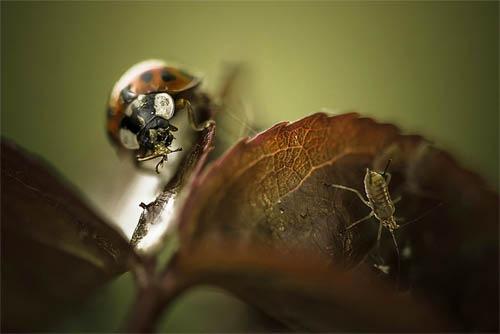 макро фото насекомых