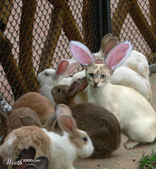 Друг кроликов