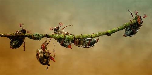 жуки на ветке