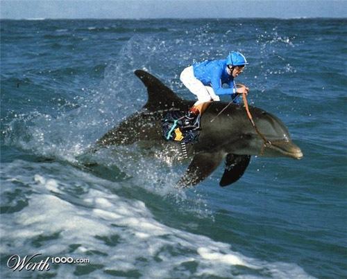 гонки на дельфинах