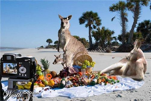 кенгуру на пикнике
