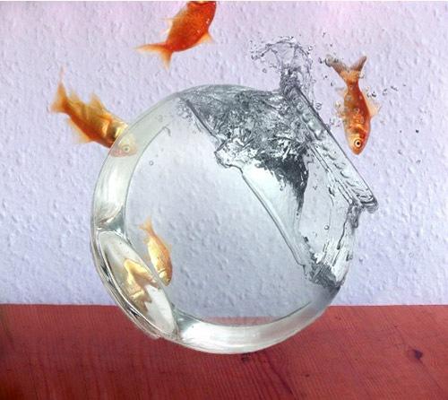 фотоманипуляция с рыбками
