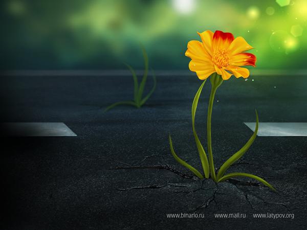 Яркий цветок на рабочий стол