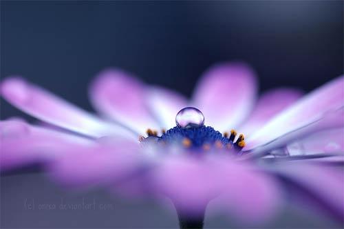 макро фотография цветка