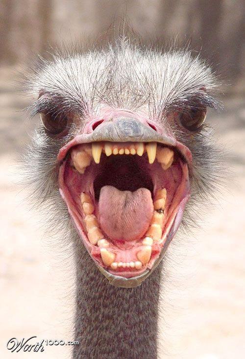 зубастый страус