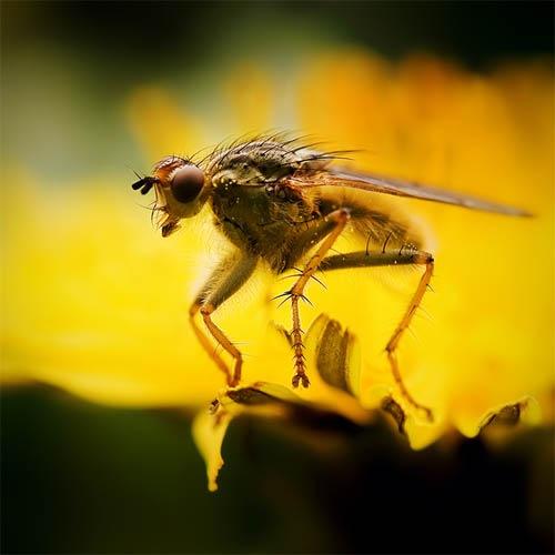 макро фотография насекомого